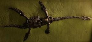 Plesiosaur skeleton.