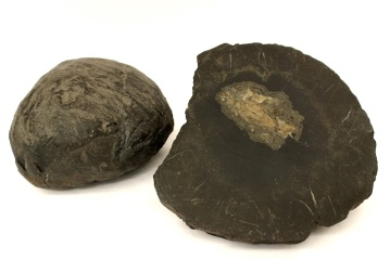 Two large dinosaur coprolites from Utah, USA.